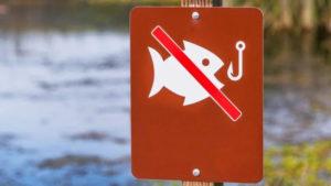 Значок. Запрет рыбалки. Рыбалки нет. Рыбалка запрещена. Нерестовый Запрет на рыбалку. Вилково. Нерестовй запрет. Запрет рыбной ловли. Нерестовый Запрет на рыбалку.